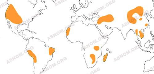 Foyers de peste dans le monde (fin du xxème siècle)
